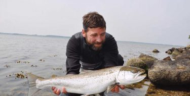 Sea trout in the danish south sea